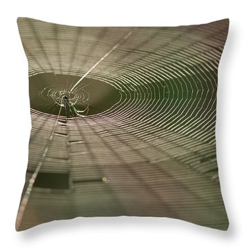 Throw Pillow featuring the photograph Orchard Orbweaver #1 by Paul Rebmann