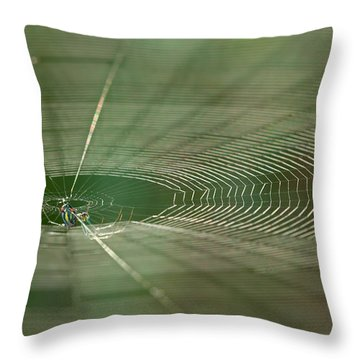 Throw Pillow featuring the photograph Orchard Orbweaver #2 by Paul Rebmann