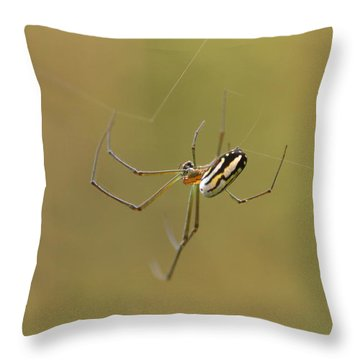 Throw Pillow featuring the photograph Orchard Spider by Greg Allore