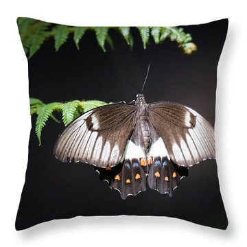 Orchard Swallowtail Throw Pillow
