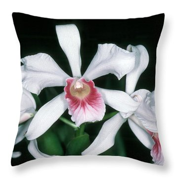 Orchid 10 Throw Pillow by Andy Shomock