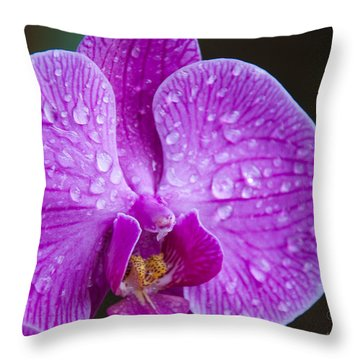 Orchid Throw Pillow by Gandz Photography