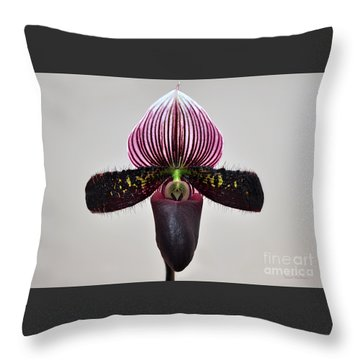 Orchid Paphiopedilum Satchel Paige X Black Beauty Throw Pillow