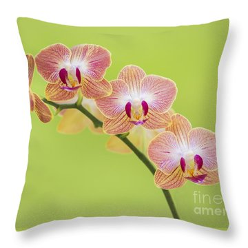 Orchids Throw Pillow by Diane Diederich