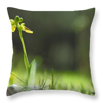 Orchids In The Forest Throw Pillow by Guido Montanes Castillo