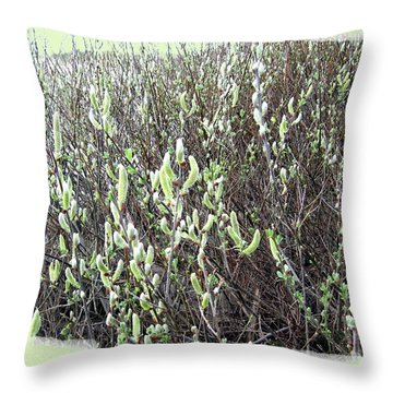 Oregon Willow Catkins Throw Pillow