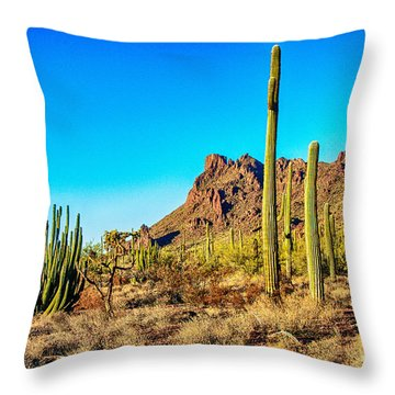 Organ Pipe Cactus National Monument Late Afternoon Throw Pillow by Bob and Nadine Johnston
