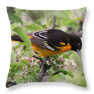 Oriole With Apple Blossoms Throw Pillow