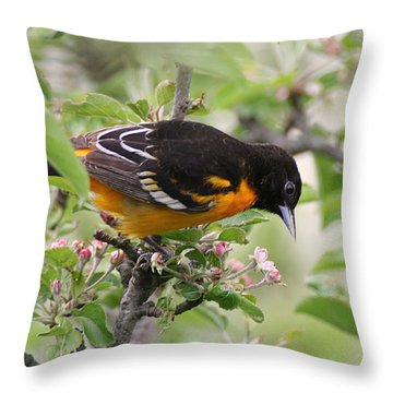 Throw Pillow featuring the photograph Oriole With Apple Blossoms by William Selander