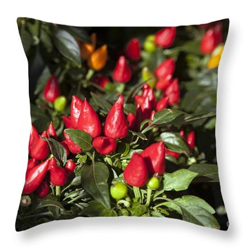 Ornamental Peppers Throw Pillow by Peter French
