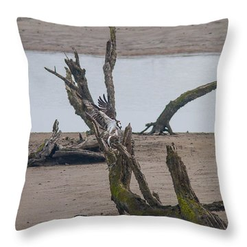 Ospray With Fish Throw Pillow by Brian Williamson