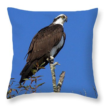Osprey 109 Throw Pillow