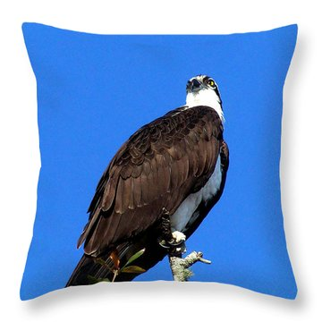Osprey 110 Throw Pillow