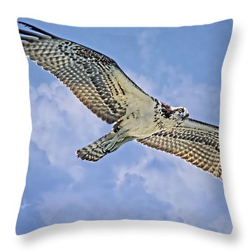 Osprey 91711 Throw Pillow by Deborah Benoit