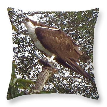 Osprey Bird In Boca Raton. Florida. Throw Pillow