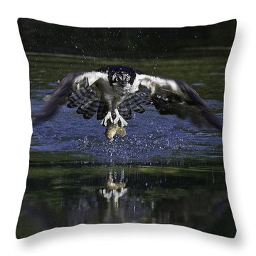 Osprey Bird Of Prey Throw Pillow by David Lester