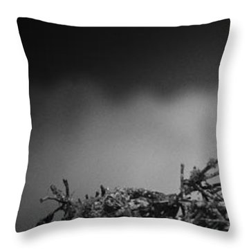 Throw Pillow featuring the photograph Osprey by Bradley R Youngberg