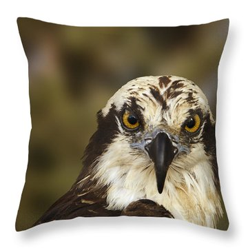 Osprey  Throw Pillow by Brian Cross