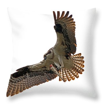 Osprey Dining Throw Pillow by Larry Nieland