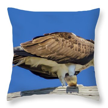 Osprey Eating Lunch Throw Pillow by Dale Powell