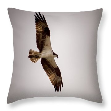 Osprey Throw Pillow by Ernie Echols