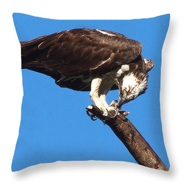 Osprey Feeding 001 Throw Pillow