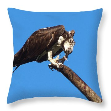 Osprey Feeding 002 Throw Pillow