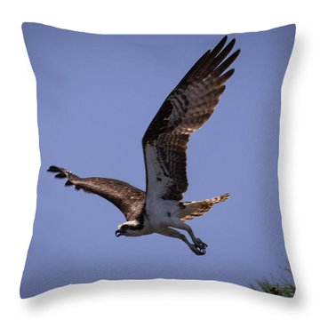 Osprey Flying With Full Wingspan Throw Pillow