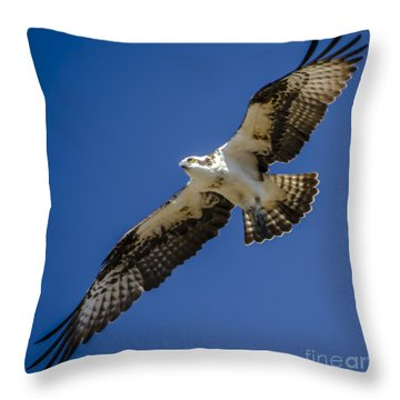 Osprey In Flight Throw Pillow by Dale Powell