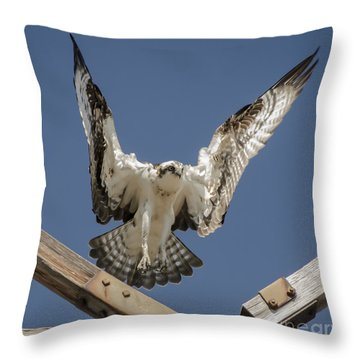 Osprey Landing Throw Pillow by Dale Powell