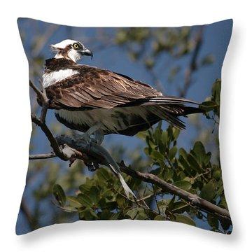 Osprey Of The Everglades Throw Pillow by Kathleen Scanlan