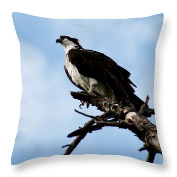 Osprey On Perch Throw Pillow