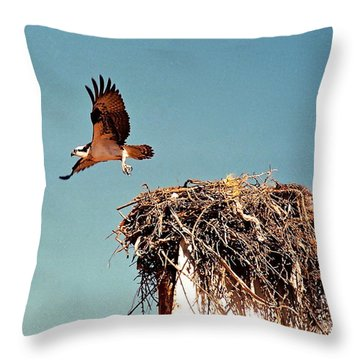 Osprey Throw Pillow by Phyllis Kaltenbach