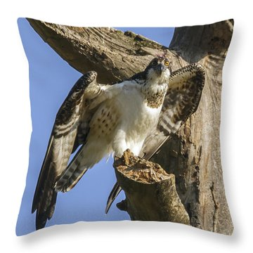 Osprey Pose Throw Pillow by David Lester