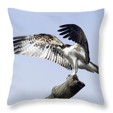Osprey Pride 2 Throw Pillow by David Lester