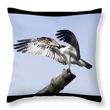 Osprey Pride 2 Throw Pillow