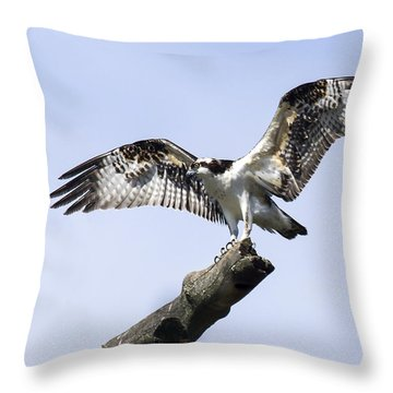Osprey Pride  Throw Pillow by David Lester