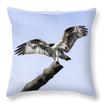 Osprey Pride  Throw Pillow