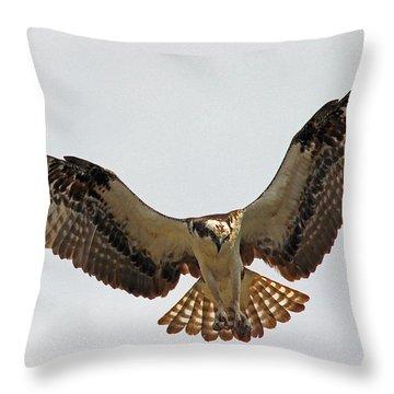 Osprey Spread Throw Pillow