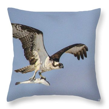 Osprey With Dinner Throw Pillow