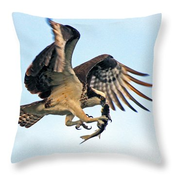 Osprey With Fish 1-6-15 Throw Pillow