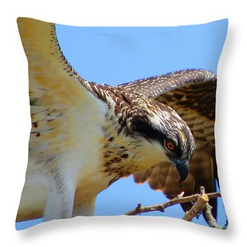 Osprey Youth Throw Pillow by Dianne Cowen