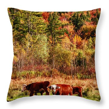 Throw Pillow featuring the photograph Cow Complaining About Much by Jeff Folger
