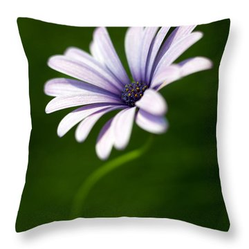 Osteospermum Daisy Throw Pillow by Tony Cordoza
