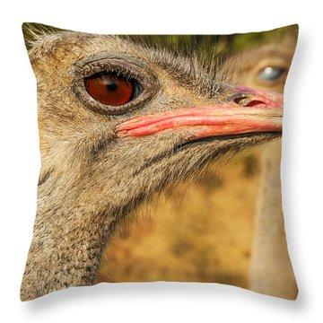 Ostrich Closeup Throw Pillow by Jess Kraft
