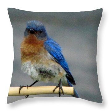 Our Own Mad Bluebird Throw Pillow by Betty Pieper