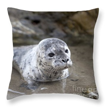 Out For A Swim Throw Pillow by David Millenheft