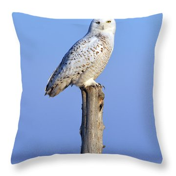 Out In The Open Throw Pillow by Tony Beck