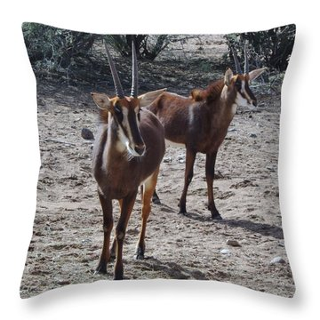 Out Of Africa B Throw Pillow