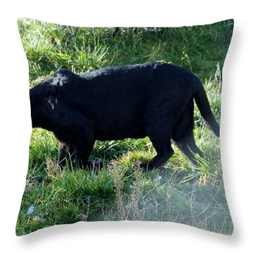 Out Of Africa  Black Panther Throw Pillow
